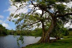 在湖旁边的结构树 免版税库存图片
