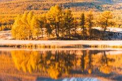 在湖树北美鹅掌揪树丛的镜子的反射 免版税库存照片