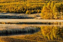 在湖树北美鹅掌揪树丛的镜子的反射 免版税库存图片