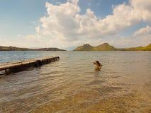 在湖武利亚格迈尼的狗游泳在希腊 库存照片