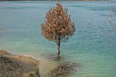 在湖烂掉01的被淹没的松木 库存照片