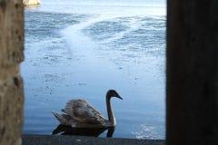 在湖的一个窗口 免版税库存图片