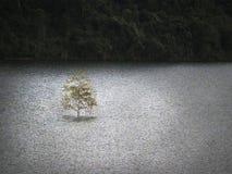 在湖的一棵树 免版税库存照片