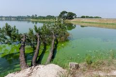 在湖的下落的树;在Barragem de Magos, Salvaterra,端起 免版税图库摄影
