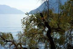 在湖的下落的树 库存照片