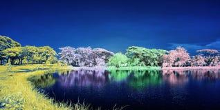 在湖的五颜六色的树 免版税库存图片