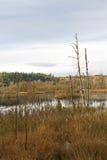 在湖的停止的结构树 免版税库存照片