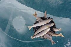 在湖的冬天捕鱼 库存照片