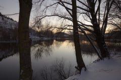 在湖的冬天树 免版税库存照片