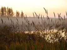 在湖的凉快的薄雾 免版税库存照片