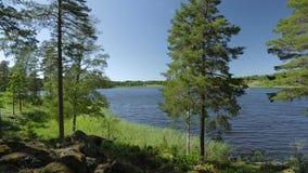 在湖的出色的意见通过高大的树木 华美的自然风景背景 瑞典, 股票视频