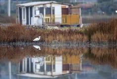 在湖的反映 免版税库存照片
