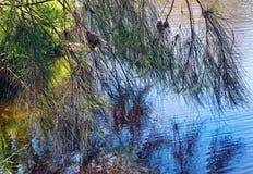 在湖的反映 免版税图库摄影