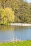 在湖的另一边的垂柳 库存图片