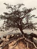 在湖的土气树 库存图片