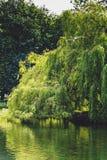 在湖的垂柳树圣斯蒂芬`的s绿园  免版税库存图片