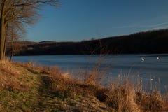 在湖的天鹅 库存照片