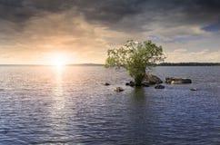 在湖的孤立树 库存图片