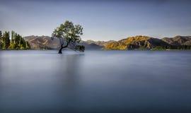 在湖的孤立树 免版税库存照片