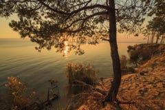 在湖的岸的偏僻的杉树 库存图片