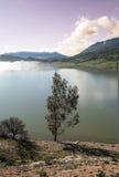 在湖的岸的结构树 图库摄影