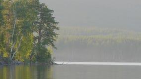 在湖的岸的美丽的蓝色清楚的水 森林的湖的看法 图库摄影