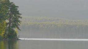 在湖的岸的美丽的蓝色清楚的水 森林的湖的看法 免版税库存照片