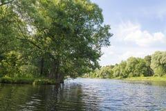 在湖的岸 免版税图库摄影