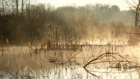 在湖的日出在乌克兰 在水的雾,美妙地美丽 股票录像