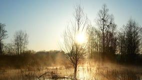 在湖的日出在乌克兰 在水的雾,美妙地美丽 股票视频