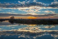 在湖的日出有光秃的树的反射的在水中 免版税图库摄影