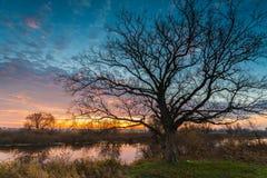 在湖的日出有光秃的树的反射的在水中 免版税库存照片