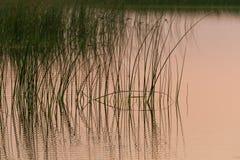 在湖的日出 图库摄影