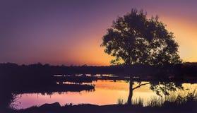 在湖的日落剪影 免版税图库摄影