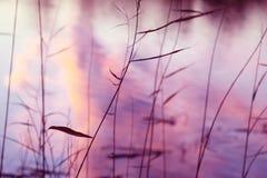 在湖的日落反射通过芦苇 免版税库存图片