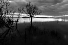 在湖的日落,有骨骼树和植物的和美丽,喜怒无常的天空 免版税库存图片