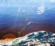 在湖的日落 芦苇和被弄脏的水表面特写镜头  库存图片