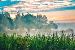 在湖的早晨风景 库存照片