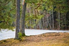在湖的春天风景 免版税库存照片