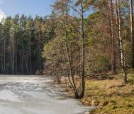 在湖的春天风景 库存照片