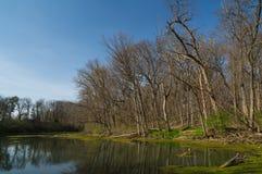 在湖的春天 图库摄影