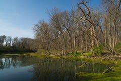 在湖的春天 免版税库存照片