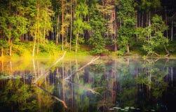 在湖的有雾的日出 免版税库存图片