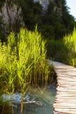 在湖的木桥在Plitvice国家公园 美丽的绿色绿松石自然本底 免版税图库摄影