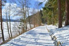 在湖的木头 免版税图库摄影