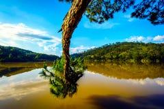 在湖的杉木 免版税图库摄影