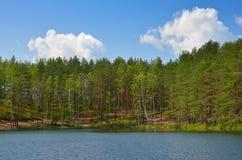 在湖的杉木 免版税库存图片