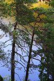 在湖的杉树在Nuksio国家公园 免版税库存图片