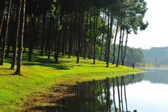 在湖的杉树 免版税库存图片