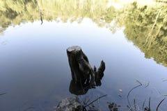 在湖的树反射山的 库存图片